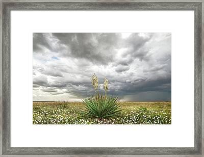 Wildorado Yucca Framed Print