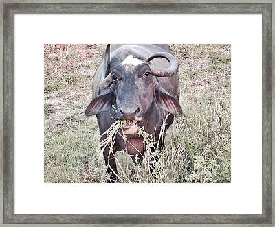Wilds Of Buffalo Framed Print