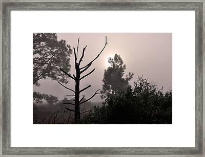 Wilds Of Myakka 001 Framed Print