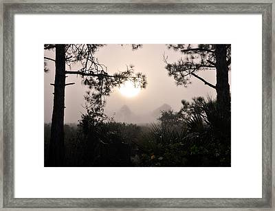 Wilds Of Myakka 002 Framed Print