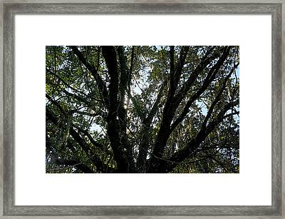 Wilds Of Myakka 004 Framed Print