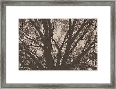 Wilds Of Myakka 005 Framed Print