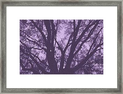 Wilds Of Myakka 006 Framed Print