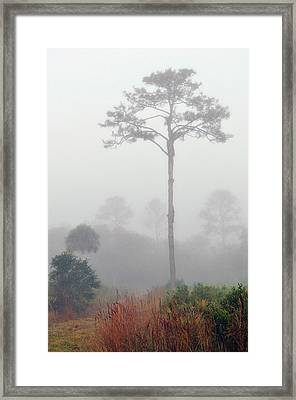 Wilds Of Myakka 007 Framed Print