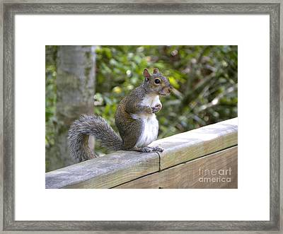 Framed Print featuring the photograph Will Pose For Peanuts by Terri Mills
