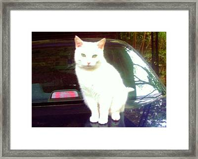 Will Wash Car For Treats Framed Print