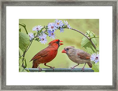 Will You Marry Me Framed Print by Bonnie Barry