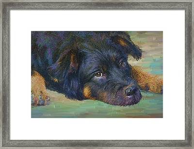 Will You Play With Me? Framed Print by Angela A Stanton