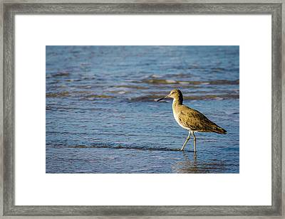 Willet 2 Framed Print