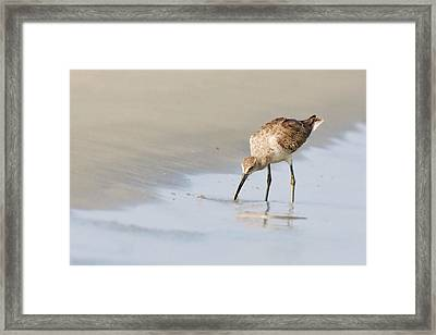 Framed Print featuring the photograph Willet On Beach by Bob Decker