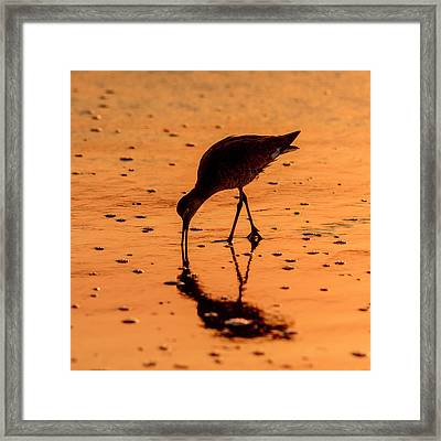 Framed Print featuring the photograph Willet On Sunrise Surf by Steven Sparks