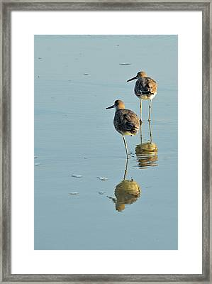 Willets On Jekyll Framed Print by Bruce Gourley