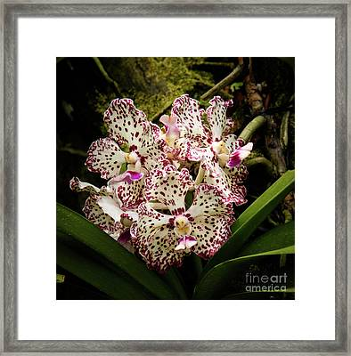 William And Catherine Framed Print