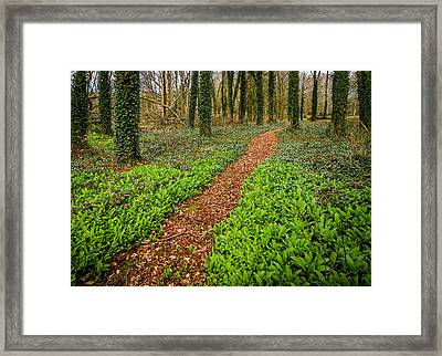 William Butler Yeats Woods Of Coole Park Framed Print