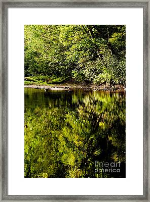 Williams River Summer  Framed Print by Thomas R Fletcher