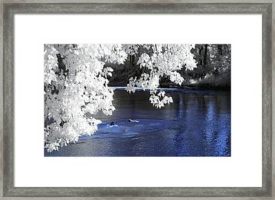 Willoughby Chagrin River Dogs Framed Print by Bob LaForce