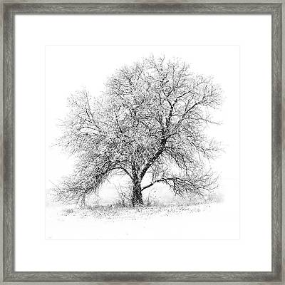 Willow And Blizzard Framed Print by Altus Photo Design