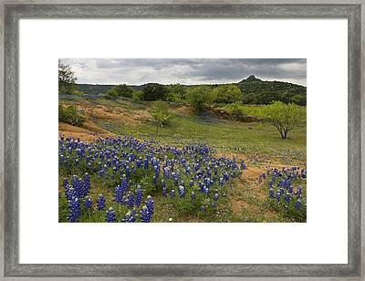 Willow City Loop 1 Framed Print