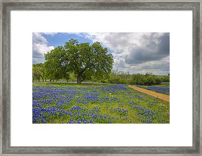 Willow City Loop 6 Framed Print by Paul Huchton