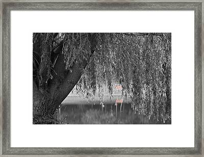 Willow Deer II Framed Print