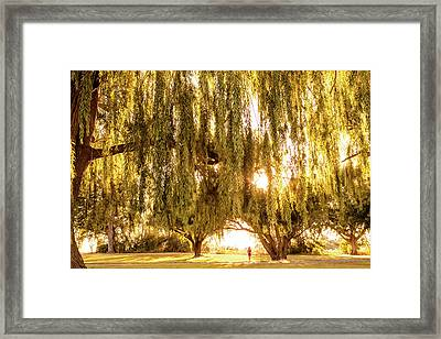 Willow Dreams Framed Print by Debi Bishop