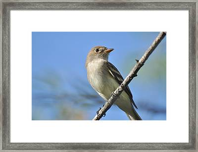 Willow Flycatcher 3 Framed Print by Gerald Hiam
