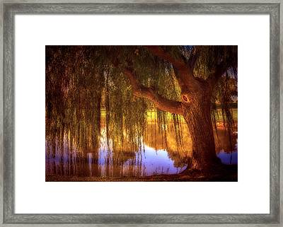 Willow Glow Framed Print