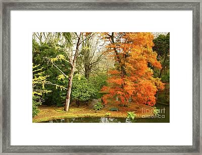 Willow In Autumn Colors Framed Print by Gaspar Avila