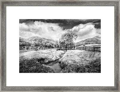 Willow In Early Autumn Black And White Framed Print