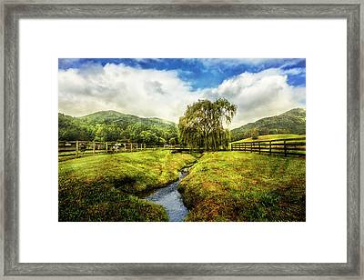 Willow In Early Autumn Framed Print by Debra and Dave Vanderlaan