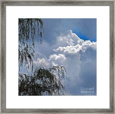 Willow In The Wind Framed Print by Skip Willits