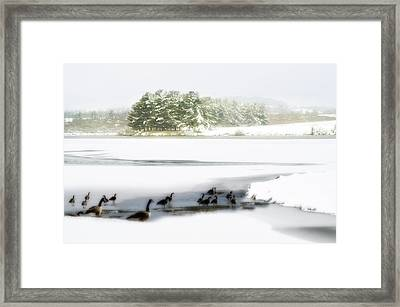 Willow Lake Geese Framed Print by Kathy Jennings