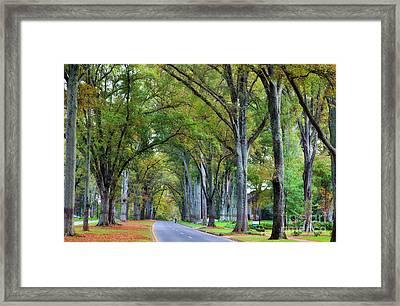 Willow Oak Trees Framed Print