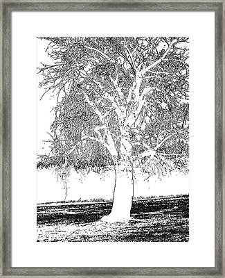 Willow Of The Field Framed Print