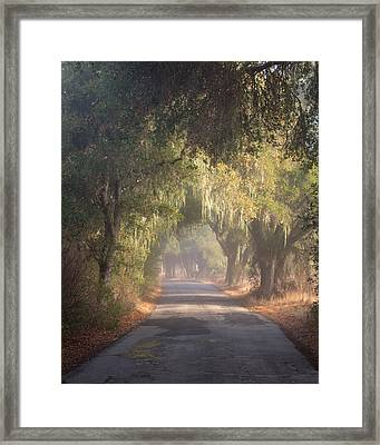 Willow Road Framed Print by Joseph Smith