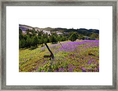 Willow Springs Station Framed Print by Bill Robinson