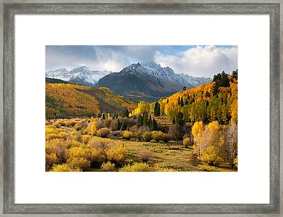 Willow Swamp Framed Print
