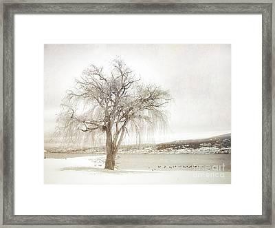 Willow Tree In Winter Framed Print by Tara Turner