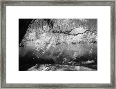 Willow Tree Lake II Framed Print