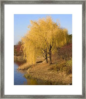 Willow Trees By The Lake Framed Print by Elvira Butler