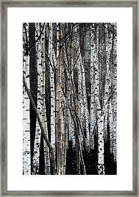 Framed Print featuring the digital art Birch by Julian Perry