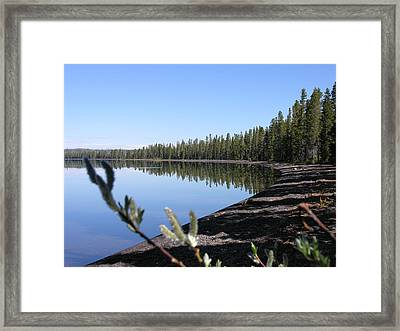 Willows Framed Print by Mel Crist