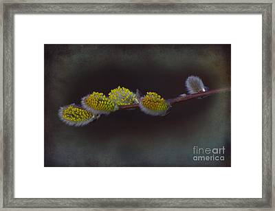 Willows Of April Framed Print by The Stone Age