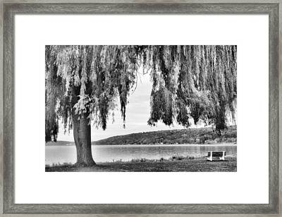 Willows Of Lake Cayuga Framed Print by Jessica Jenney