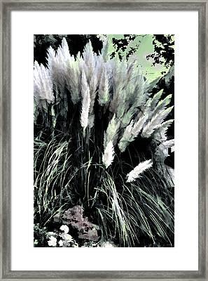 Willows Framed Print