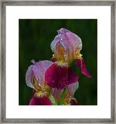 Willowwood Iris Framed Print