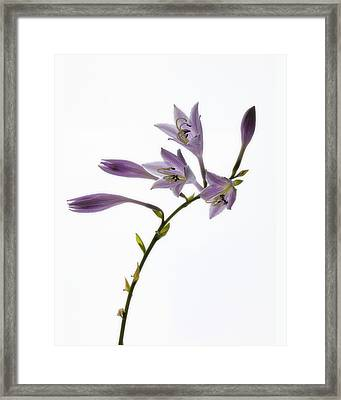 Framed Print featuring the photograph Willowy Whispers by Mike Lang