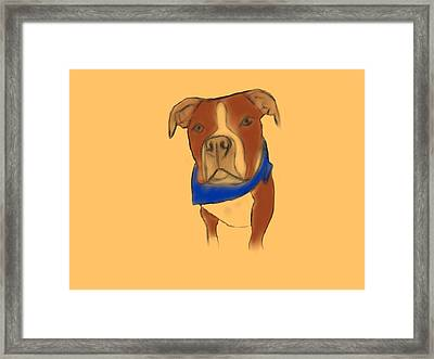 Willy The Pittie Framed Print