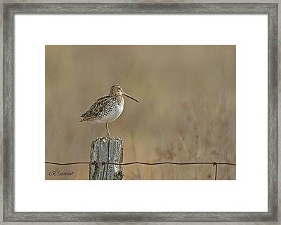 Wilson's Snipe On A Post Framed Print by CR Courson