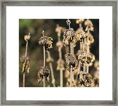 Framed Print featuring the photograph Wilted by Nathan Rupert